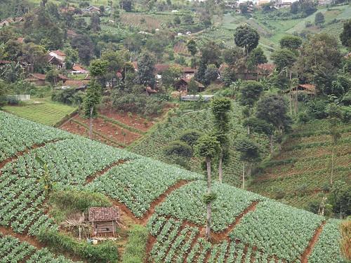 green indonesia landscape olympus farms bandung westjava agriculture e30 dago zudzowne patrickbeintema