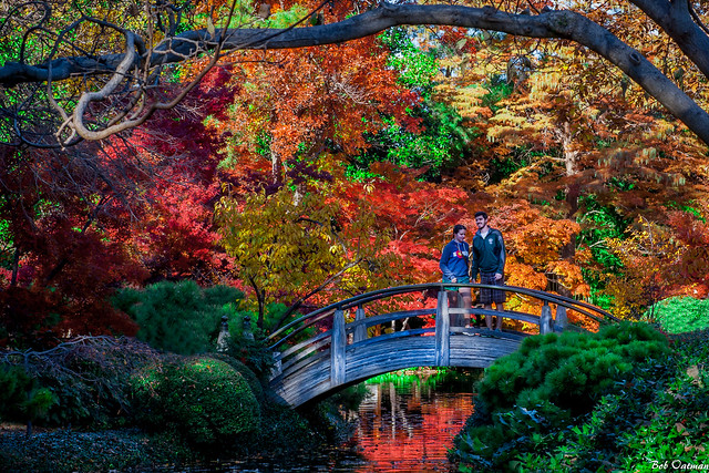 Fall Colors at the Japanese Gardens