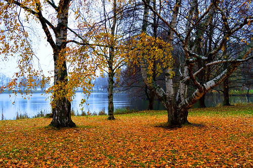 syksy suomi autumn maisema landscape yellow lake järvi carpet metsämaisema nikon scape views d3200 nikond3200 finland fog mist water lahti tree trees europe