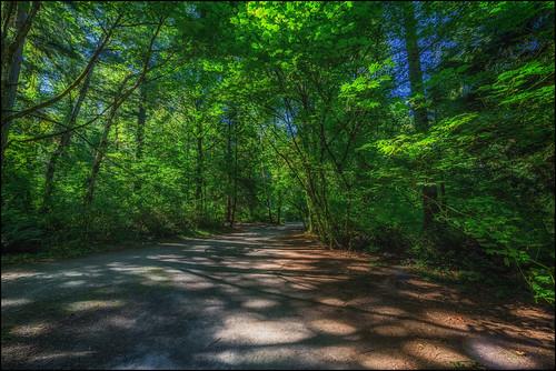 crescentpark surrey southsurrey path lightandshadows shade shadows forest samyang14mm28 nikond750 martinsmith ©martinsmith maples britishcolumbia canada ca