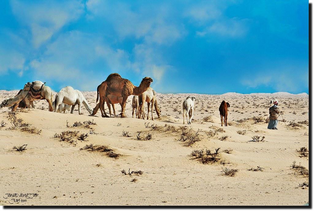 DUNES & CAMELS HEARD---Explored Aug 7,2016 #221
