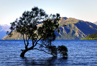 Lone tree Lake Wanaka. NZ | by Bernard Spragg
