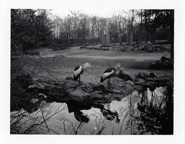 Kronenkraniche - I shot film