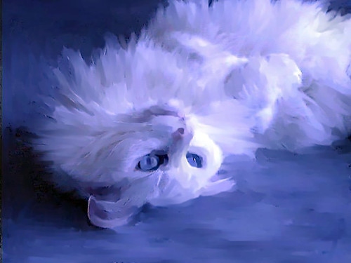 White Cat Blue 2015   by ericwagner
