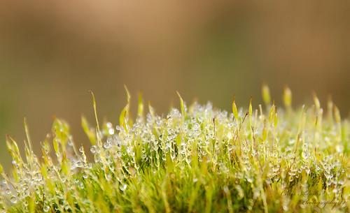 light macro nature water dewdrops bokeh dew waterdrops minature macroworld miniworld saveearth