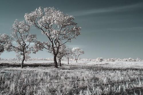 7 Tree processed EPM1 | by Matt Jones (Krasang)
