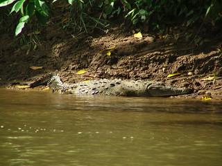 Costa Rica 2006 - 525