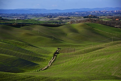Green Hills Around Siena!