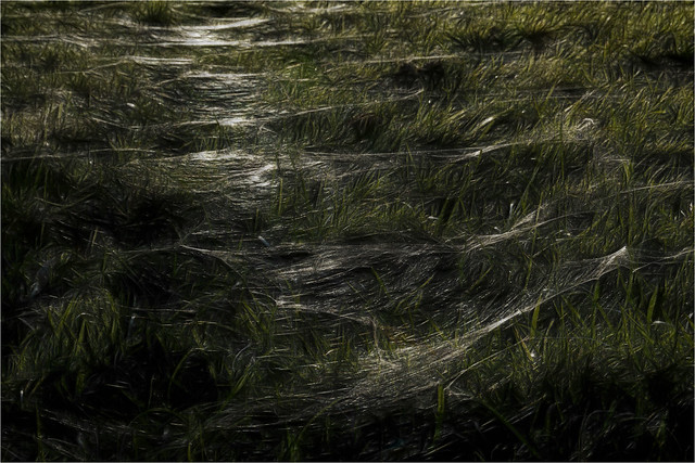 Dancing webs
