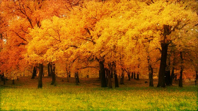 Fall Nature Wallpapers 4K