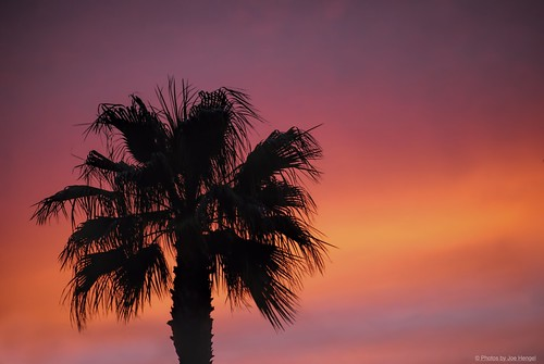 california ca pink sunset orange tree silhouette clouds golden evening glow purple outdoor lavender silhouettes palm palmtrees socal palmtree southerncalifornia orangecounty oc sherbet theoc goldenhour eveninglight goldenstate eveningskies cloudsorangecounty