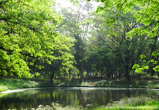 The trees look into the reflction in pond - Shibpur Botanical Garden   by moon@footlooseforever.com