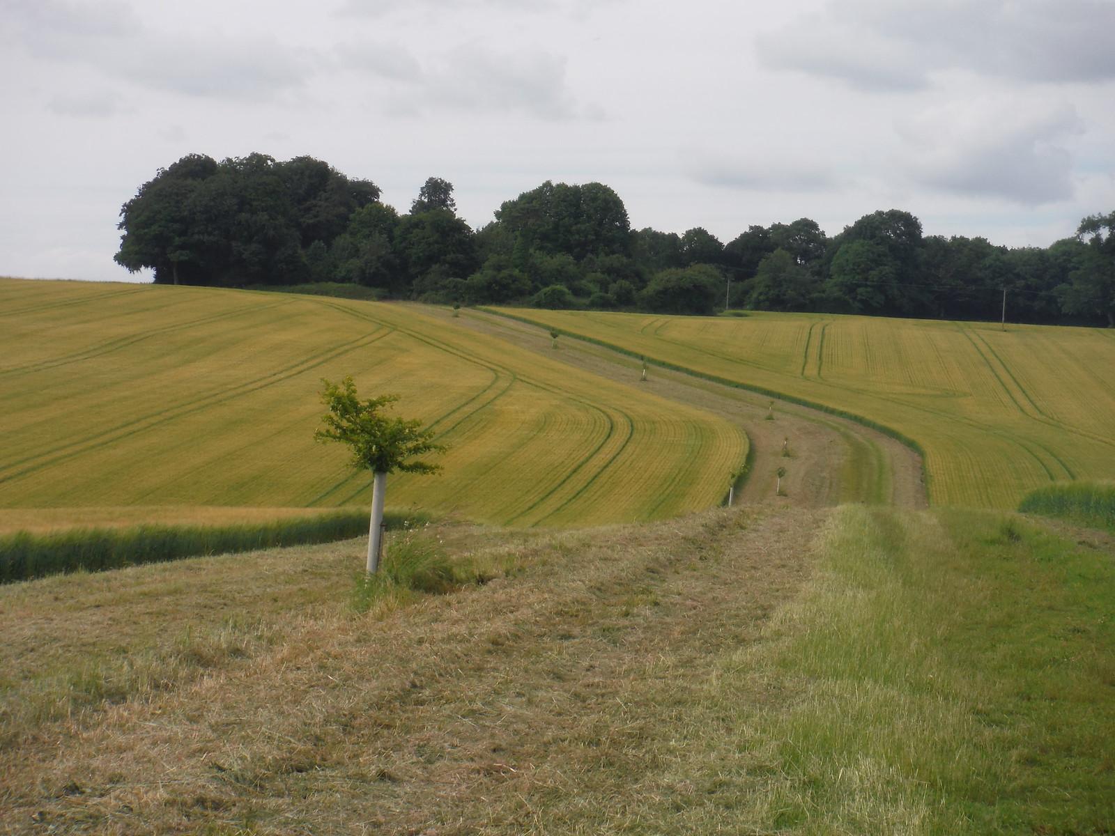 Towards Park Farm, Michelmersh SWC Walk 265 - Dean to Mottisfont and Dunbridge