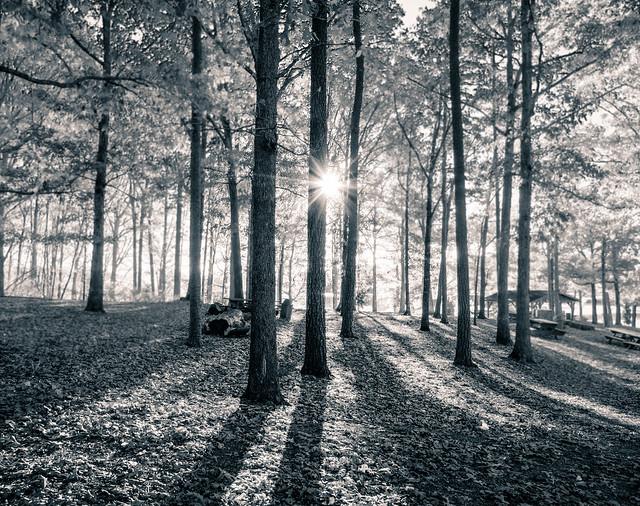 What light through yonder tree breaks ?