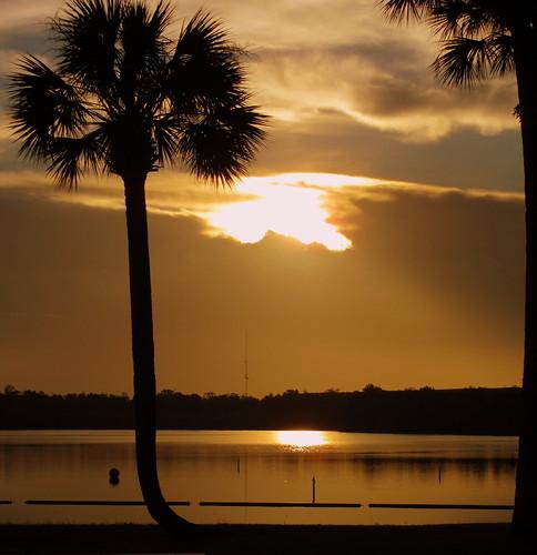 florida kissimmee sunrise water lake palm tree serene palmtree shore outdor landscape cloud