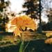Mum (golden hour)