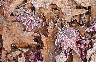 leaves | by Muffet