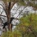 Flickr photo 'American Crow (Corvus brachyrhynchos)' by: Mary Keim.