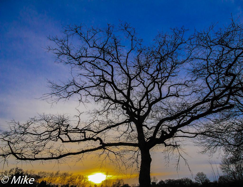 A tree at sunset HTT