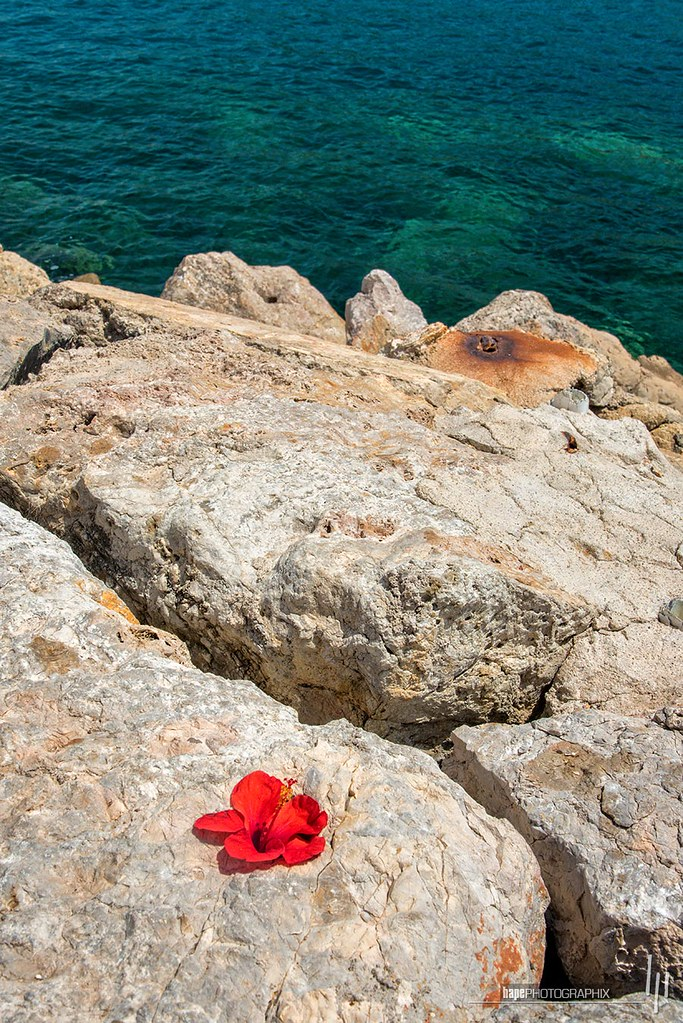 Hibiscus flower by the sea