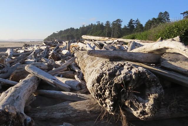 Log Strewn