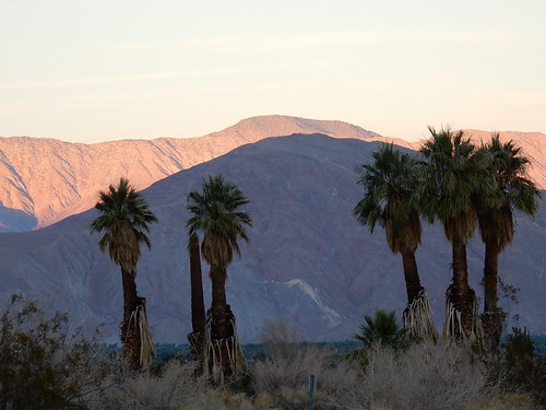 Borrego Palm Canyon Campground - palmen