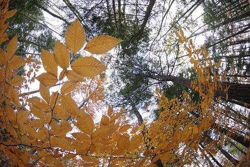 autumn brown fall colors leaves buffalo woods pretty angle wide lookup fisheye foliage ridge chestnut inspirational 8mm