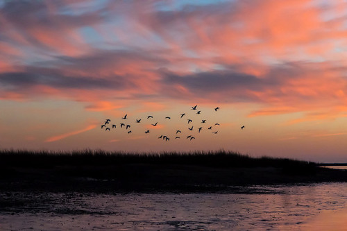 sunset sky birds clouds flying ibis whiteibis pinckneyislandnationalwildliferefuge