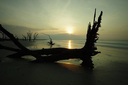ocean seascape tree beach sc sunrise photography bay long exposure pentax south roots atlantic filter nd carolina botany 15mm density edisto neutral k5ii