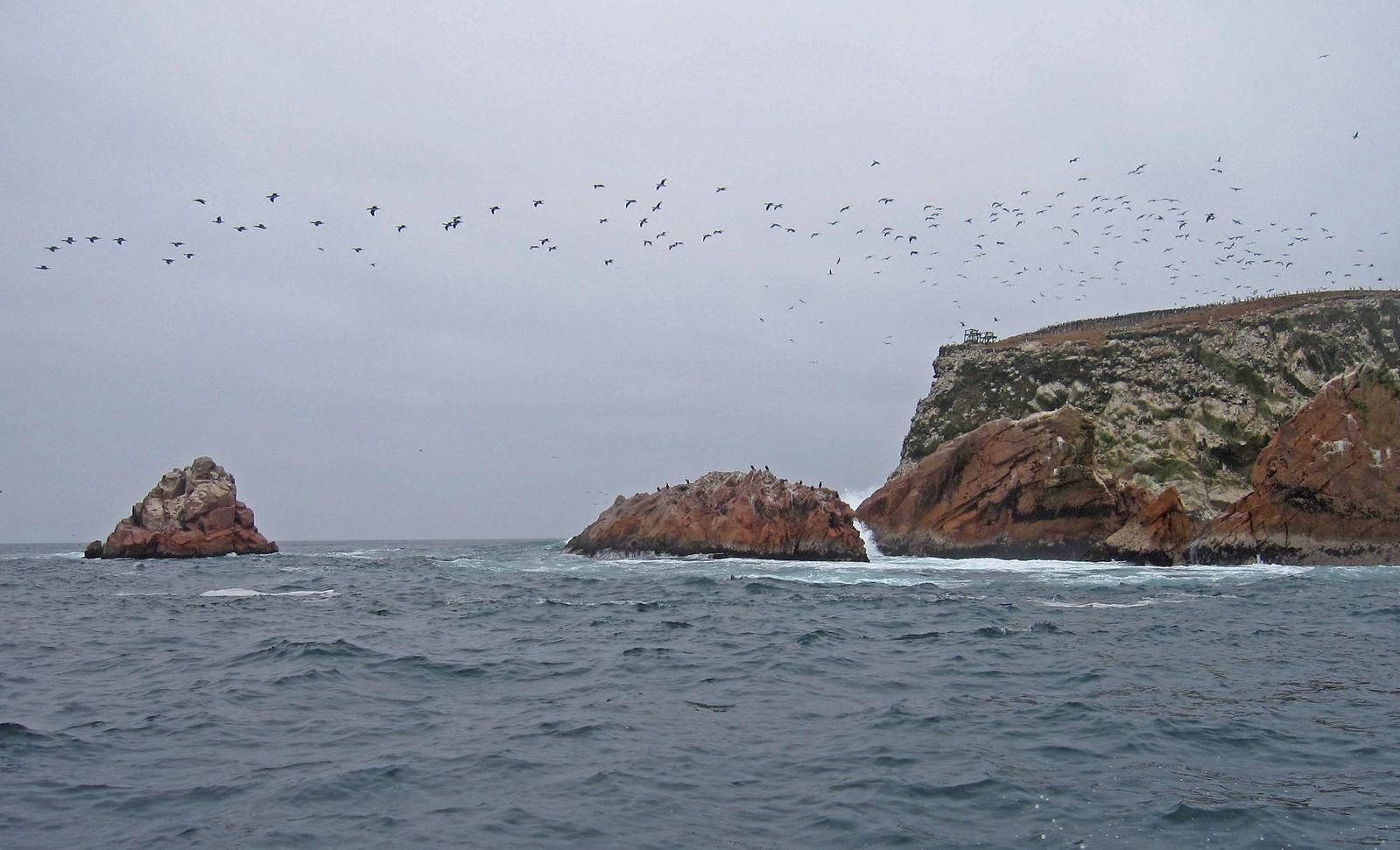 Islas Ballestas 100