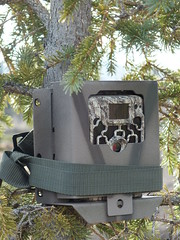 Learning how to set up trail cameras