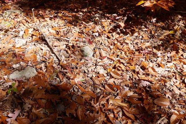 日, 2014-10-12 11:10 - Sterling Forest State Park