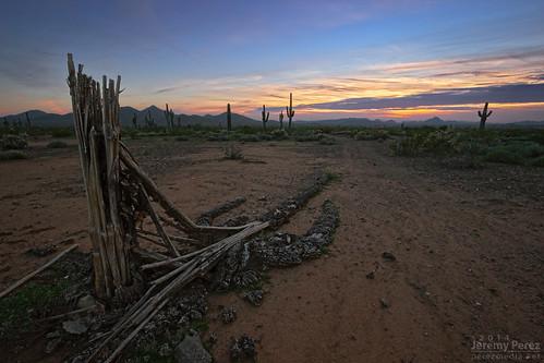 sunset arizona phoenix landscape skeleton desert fallen saguaro