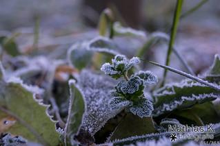 Frost | Projekt | Tag 361