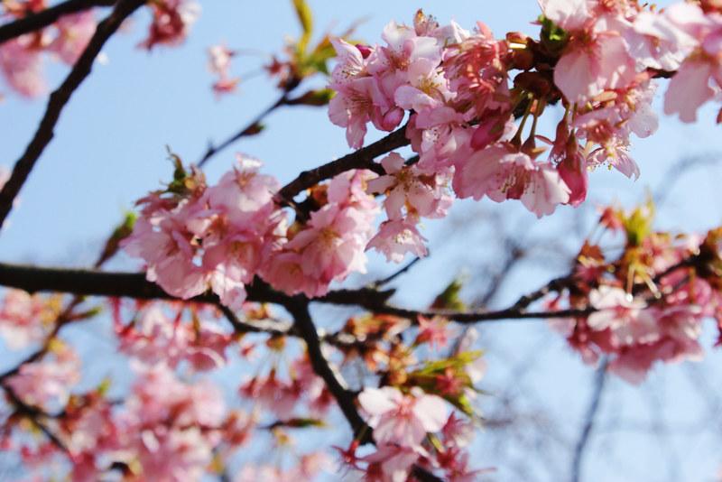 2014-03-16_00114_高松山