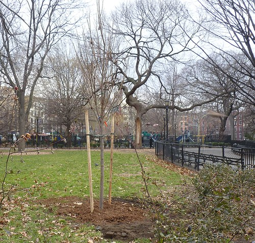 New Elm West Lawn | by GammaBlog