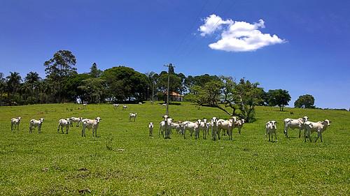 brasil brazil campinas joaquimegídio distrito américadosul rural southamérica pico cabras picodascabras trilha trail ontheroad estrada naestrada