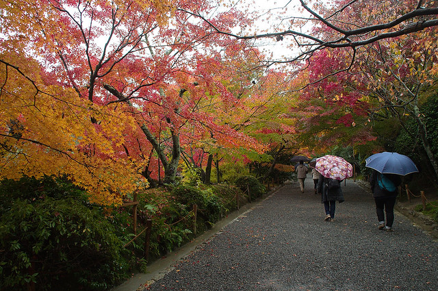 Garden In The Rain, 2014