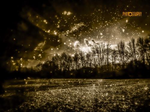 trees sky nature monochrome sepia photoshop landscape md unitedstates maryland cordova easton unitedstate olympusepl1