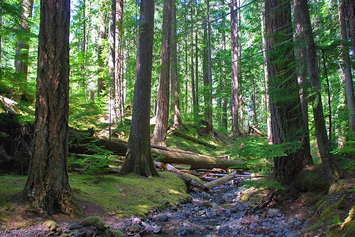 Lupin Falls Trail, Strathcona Provincial Park, Vancouver Island, British Columbia, Canada