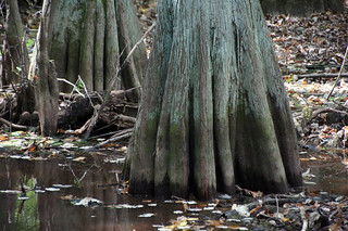 Tupelo-Baldcypress Swamp, Natchez Trace Parkway | by SomePhotosTakenByMe