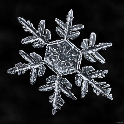 snowflake winter snow flower macro ice nature water frozen crystal geometry flake symmetry hibiscus fractal mpe focusstacking