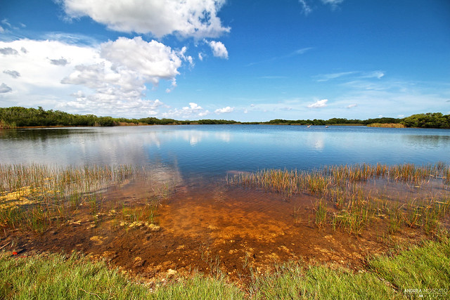 Ninemile Pond - Everglades National Park, Florida