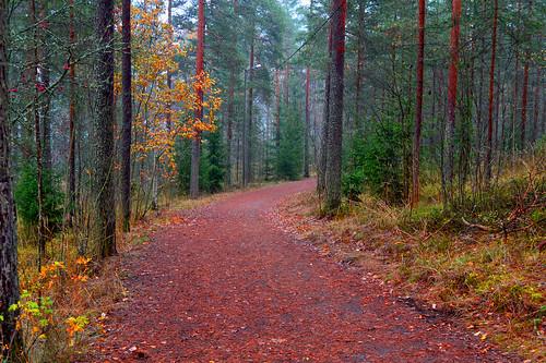 syksy autumn metsä suomi colors forest landscape maisema nature luonto carpet metsämaisema mäntymetsä mist sumu pine nikon scape views trees d3200 nikond3200 europe