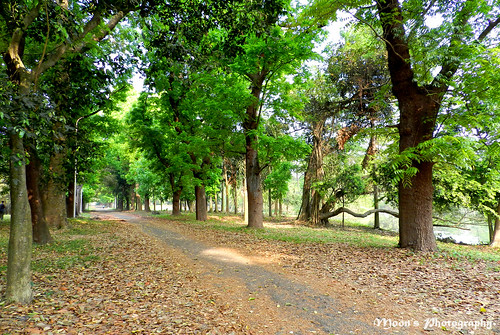 country road, #naturetrail - Shibpur Botanical Garden | by moon@footlooseforever.com