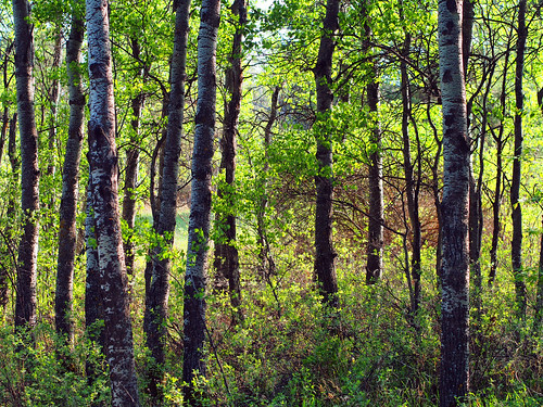 trees canada green leaves forest woods olympus saskatoon saskatchewan omd em5