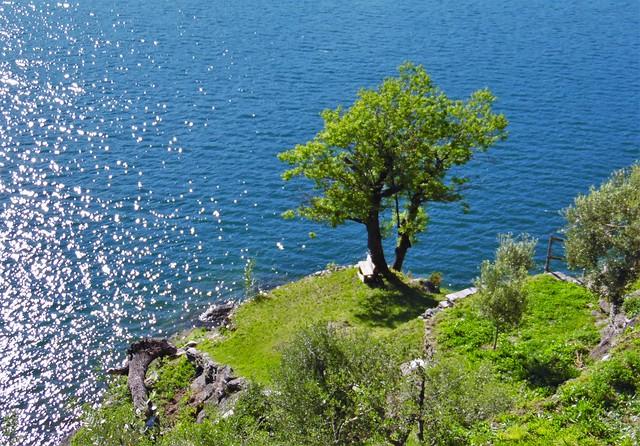 Lakeside Seat Under a Tree - Lake Como Italy