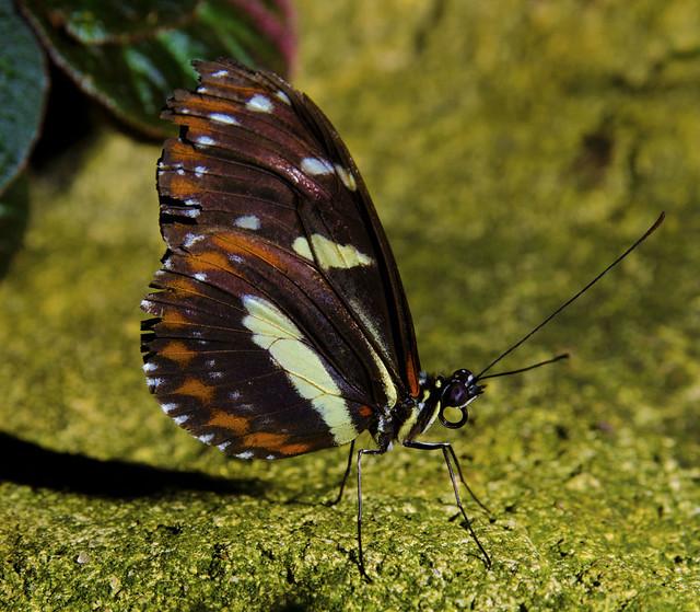 20160626_Cockrell Butterfly Center_0014