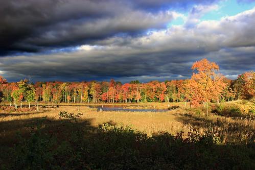 pennsylvania waynecounty snagpond lehighriver poconos wetland marsh headwaters trees foliage sky clouds stratocumulus autumn dusk nature creativecommons