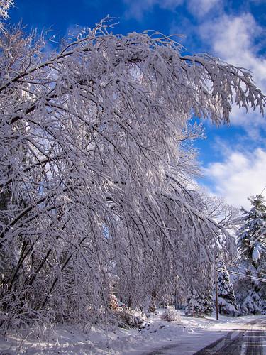 White Thanksgiving Bent Tree   by ramcewan